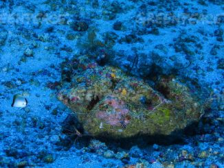 O recife de corais, esponjas e rodolitos tem 9,5 mil quilômetros quadradosDivulgação/Greenpeace