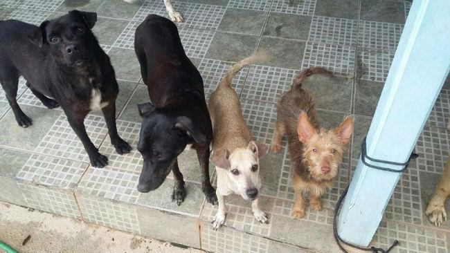 659452aac ONG Amparo Animal fechará as portas - Folha de Rondônia News