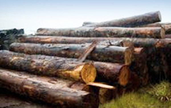 A madeira confiscada por ilegalidades na documentação foi extraída em Roraima, Rondônia e no Amazonas.