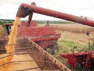 Previsão da safra de cereais, leguminosas e oleaginosas caiu 0,8%, indo para 228,1 milhões de toneladas  (Arquivo/Agência Brasil)