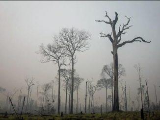 Proposta pretende estimular o desenvolvimento de áreas degradadas de maneira sustentável e protegendo as florestas.