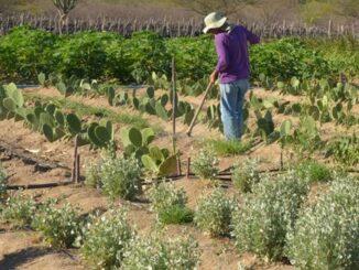 CMN facilita renegociação de dívidas de produtores rurais